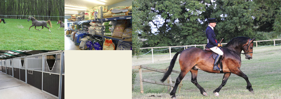 Pictures of Shoreside Stables and feed shop